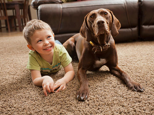 Carpet Cleaning Waldorf Carpet Cleaning and Carpet Installation Services