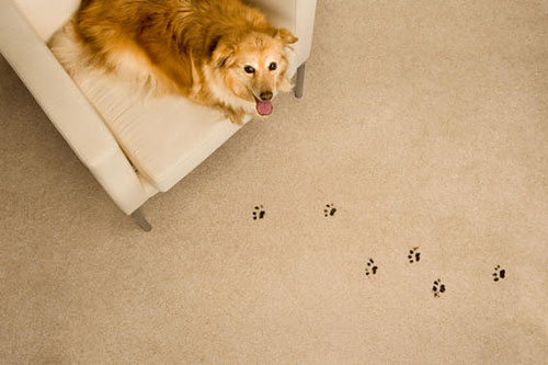 Carpet Cleaning Waldorf Pet odor and stains on carpet and upholstery